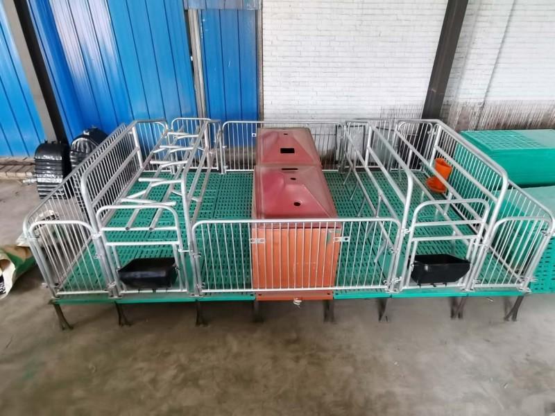 双体母猪产床 复合漏粪板 母猪分娩床 养殖设备